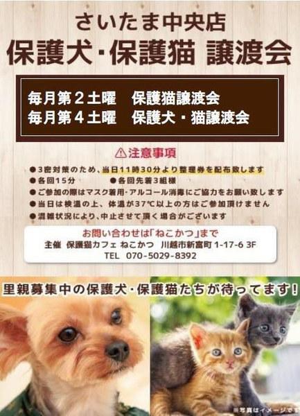 保護 犬 埼玉