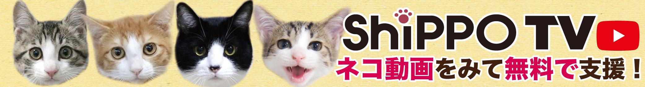 可愛い猫動画をみて無料で支援!ShippoTV