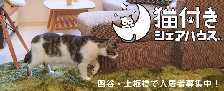 無償 猫 譲り ます 掲示板